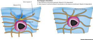 19-09-16-cortex-cerebral