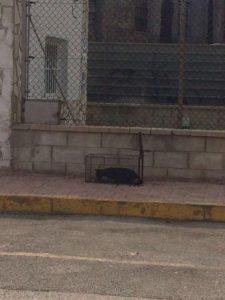 TORREVIEJA COMIENZA HOY SU CAMPAÑA DE CASTRACIÓN DE GATOS
