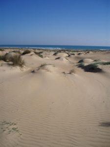 jornada-para-la-conservacion-flora-dunar