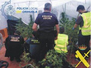 La Policía Local de Orihuela y la Guardia Civil desmantela una producción de plantas de marihuana en la pedanía de San Bartolomé